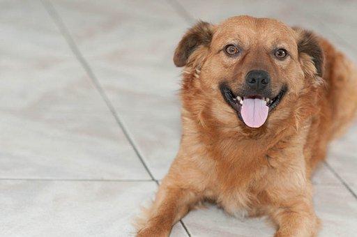 Puppy, Dog Smiling, Dog, Pet, Adorable, Beautiful