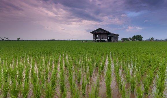 Beautiful, Best, Calm, Cottage, Farmer, Feeling, Hobby