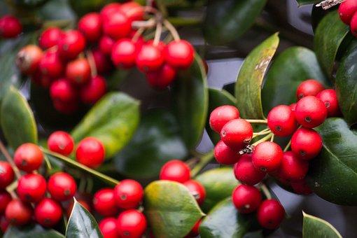 Christmas, Christmas Decorations, Christmas Greenery