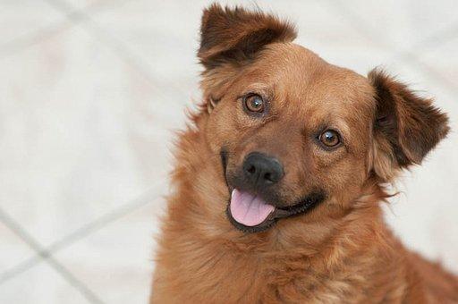 Puppy, Dog Smiling, Dog, Pet, Adorable