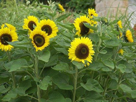 Sonnenbkume, Summer, Sun