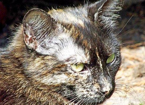Cat, Domestic Cat, Outdoor, Skeptical