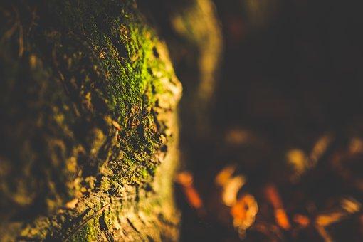 Close-up, Depth Of Field, Moss, Texture