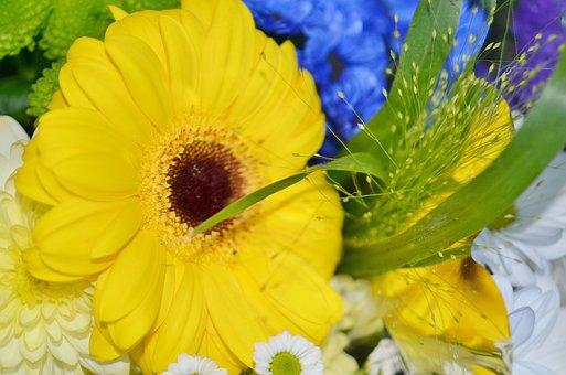 Sun Wing, Flower, Blue, White, Yellow