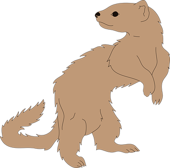 Ferret, Animal, Mammal, Pet, Wildlife, Domesticated