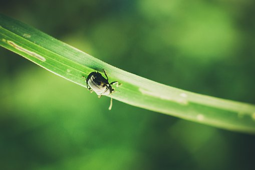 Beetle, Blade Of Grass, Blur, Bright, Bug, Dew