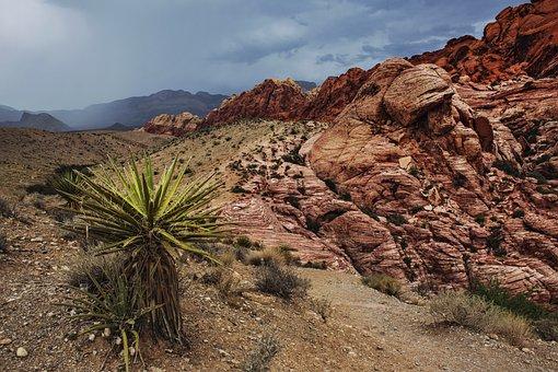 Arid, Barren, Bushes, Cactus, Canyon, Clouds, Desert
