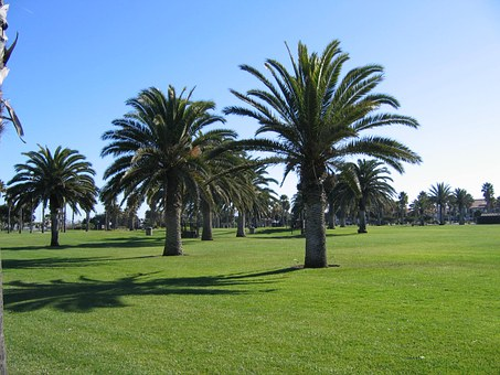 Oxnard Beach, California, Palm Trees, Coast, Green