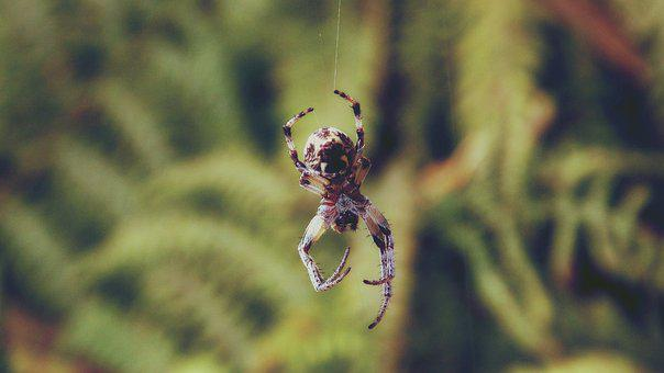 Animal, Arachnid, Close-up, Cobweb, Creepy, Hairy