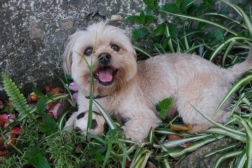 Dog, Funny, Small, Animal, Pet, Cute, Funny Face, Fur