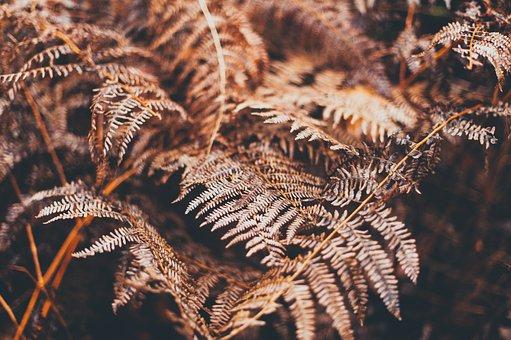Blur, Close-up, Environment, Fern, Focus, Leaves, Light