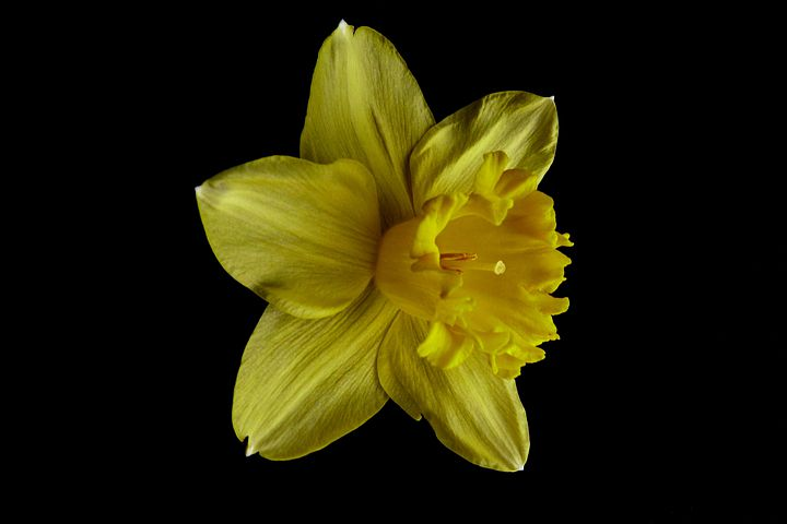 Flower, Macro, Yellow, Garden, Nature, Spring, Petal