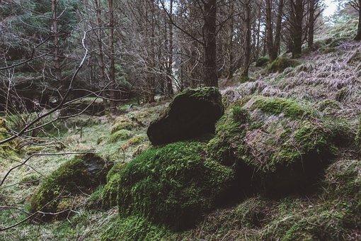 Boulders, Daylight, Environment, Forest, Grass