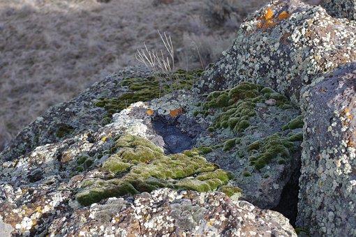 Lichen, Moss, Rocks, Fungus, Green