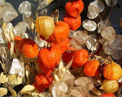 Honesty, Physalis, Autumn, Fall, Arrangement