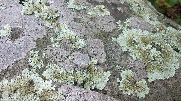 Lichen, Rock, Stone, Plant, Nature, Moss, Natural