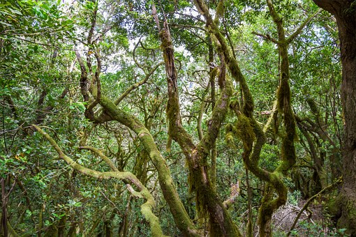 Nature, Forest, Trees, Summer, Green, Moss, Lichen