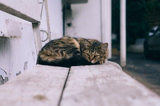 Animal, Bench, Cat, Cute, Domestic, Feline, Kitten