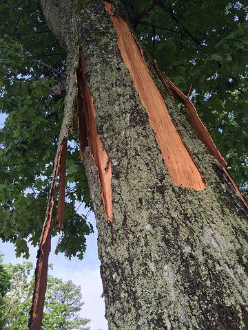 Splinter, Tree, Crack