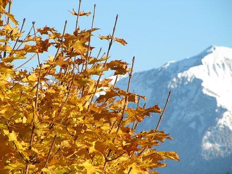 Maple, Autumn, Leaf, Colorful, Leaves, Fall Foliage