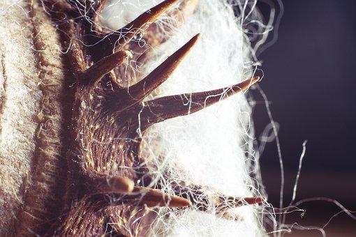 Chestnut, Spur, Fibers, Pointed, Cotton, Flash, Light