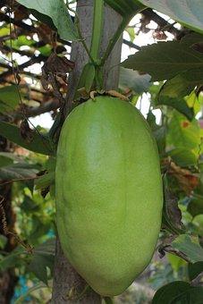 Big Passion Fruit, Food, Fresh