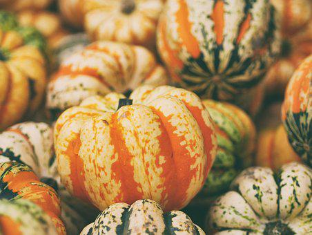 Close-up, Decoration, Delicious, Food, Fresh, Gourd