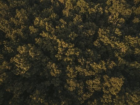 Aerial View, Forest, Green, High Angle Shot, Trees