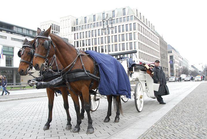 Horses, Carrozza, Romantic, Berlin, Walk, Calash