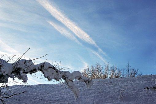 Construction Pole, Branch, Sky, Snow, Snow Magic