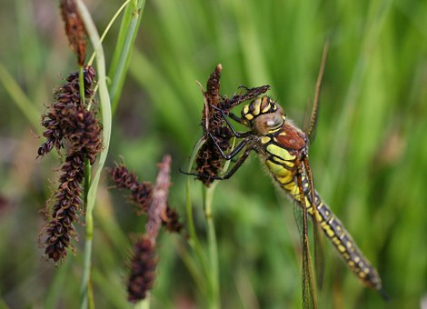 Wasp, Insect, Makrom Close Up, Sting, Sprinkle, Plant