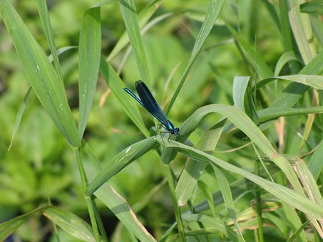 Dragonfly, Insect, Bug, Wing, Fly, Nature, Animal