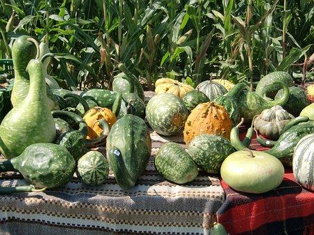 Pumpkin, Green, Autumn, Decorative Squashes