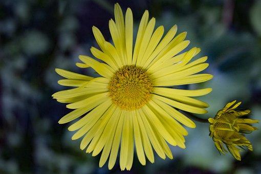 Yellow, Flower, Beautiful, Green, Spring, Wildflower