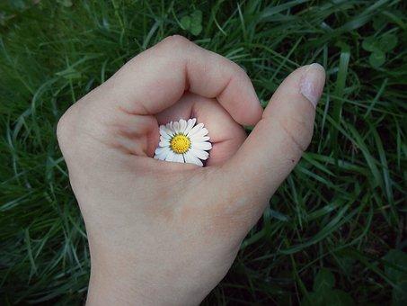 Hand, Flower, Daisy, Secret, Yellow, White, Grass
