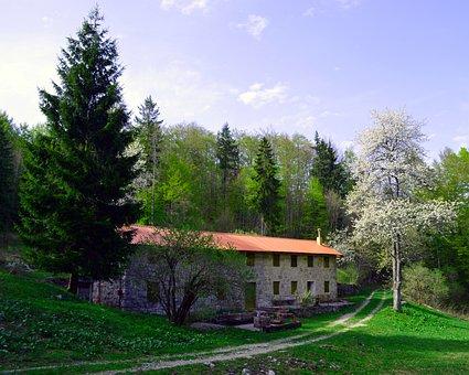 Pine Tree, House, Pine, Tree, Home, Landscape