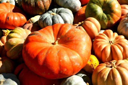Pumpkins, Squash, Orange, Thanksgiving, Vegetable