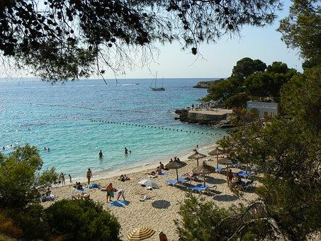 Beach, Mallorca, Pine, Blue Water, Cala