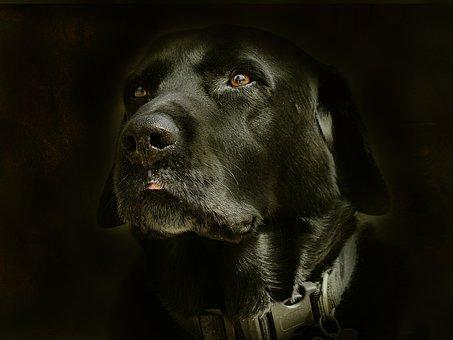 Retarto, Dog, Face, Posing