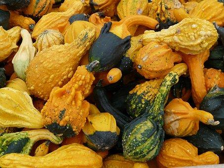 Decorative Squashes, Pumpkin, Pumpkin Art
