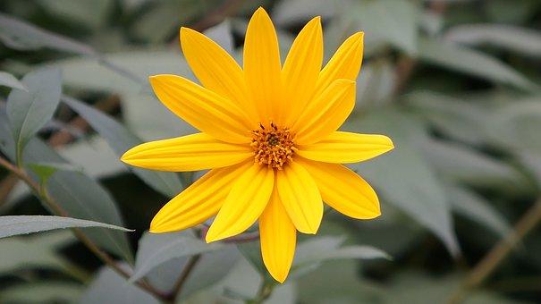 Flower, Blossom, Bloom, Close, Summer, Yellow Flower