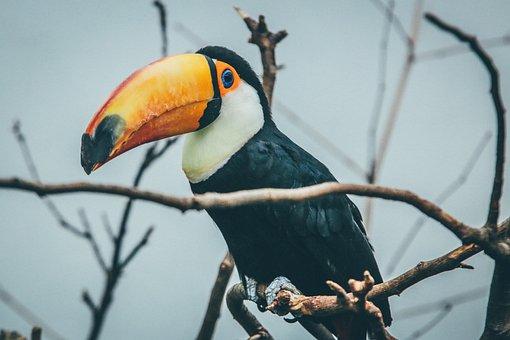 Animal, Avian, Beak, Bird, Branches, Feathers, Parrot