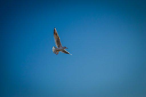 Autumn, Azov, Birds, Leaves, Park, Sea, Seagull, Sun