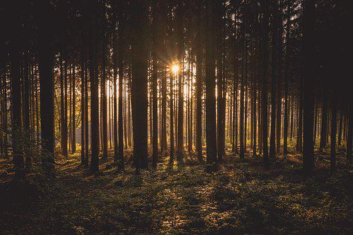 Forest, Glade, Trees, Silhouettes, Backlighting