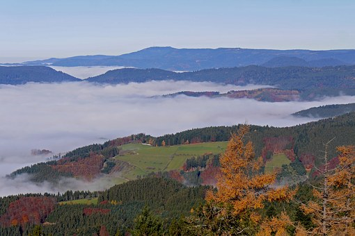 Black Forest, Fall Color, Herbstnebel, Autumn Colours