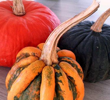 Pumpkins, Black, Orange, Variety, Halloween, Holiday