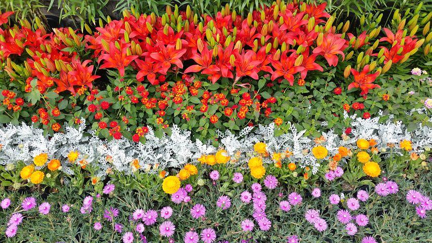 Flower Garden, Ulsan, Taehwa