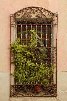 Window, Plant, Window Sill, Fence, Iron, Wrought Iron