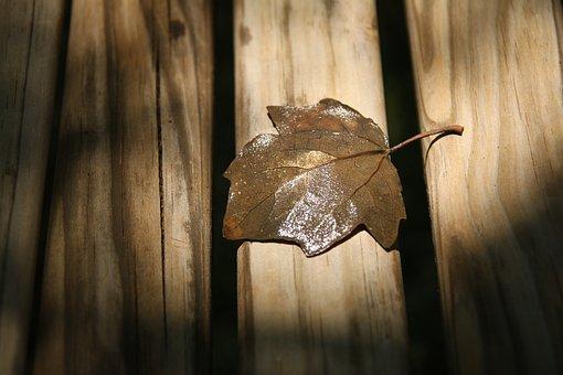 Autumn Leaf, Close-up, Dry Leaf, Hardwood, Leaf, Lumber
