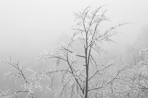 China, Anhui, Huangshan, Winter, Snow, Plant